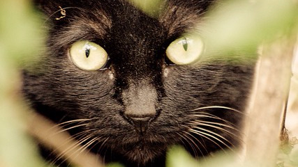National Black CatDay