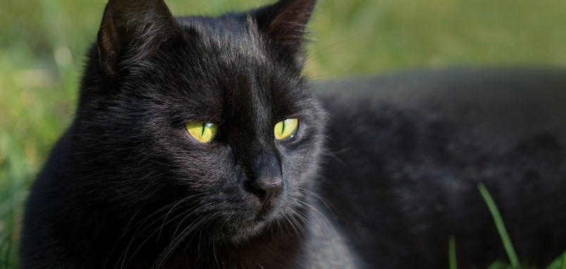 Black Cat Day – 27th Oct, 2017   Days Of TheYear